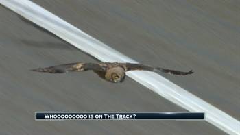 An Owl Brings Out the Red Flag During Practice